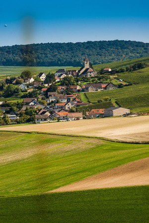 campagne: Champagne vineyards Cuis in Marne department, Champagne-Ardennes, France, Europe