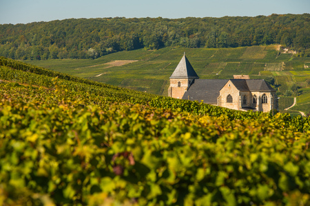 Champagne vineyards Chavot Courcourt in Marne department, France Europe