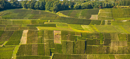 Champagne vineyards Mancy in Marne department, Champagne-Ardennes, France, Europe