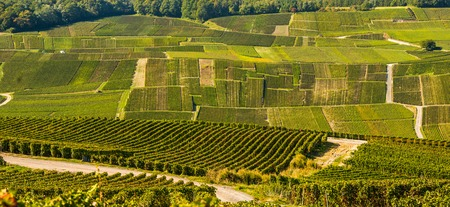 single whip: Champagne vineyards Mancy in Marne department, Champagne-Ardennes, France, Europe