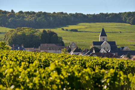 quoted: Champagne vineyards and church in Marne department, Champagne-Ardennes, France, Europe