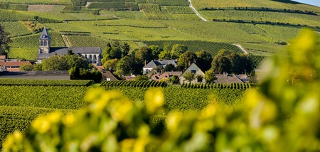 campagne: Champagne vineyards Mancy in Marne department, Champagne-Ardennes, France, Europe