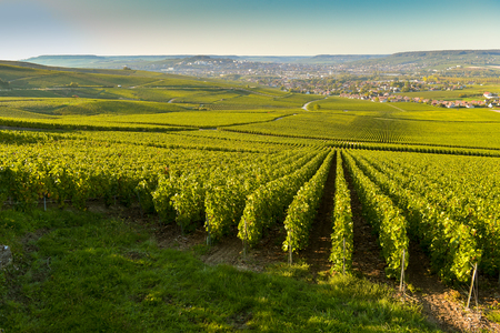 Sunset, Wineyard, Bordeaux Wineyard-France, Europe, Wine