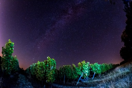Grape field in the night, Bordeaux Wineyard, France