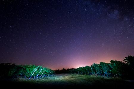 grape field: Grape field in the night, Bordeaux Wineyard, France