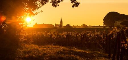 saint emilion: Saint Emilion, Vineyard Sunrise, Bordeaux, France, Europe Stock Photo