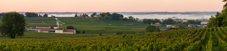 saint emilion: Saint Emilion, Vineyard Sunrise, Bordeaux Wine, France Stock Photo
