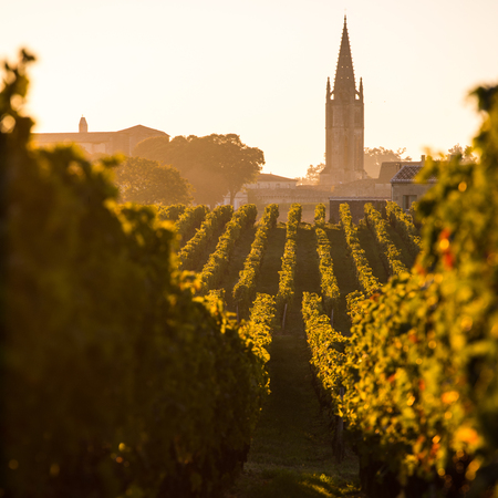 Saint Emilion, Vineyard Sunrise, Bordeaux Wine, France Archivio Fotografico