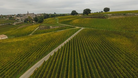 Aerial view of Saint Emilion vineyard in autumn, France, Europe
