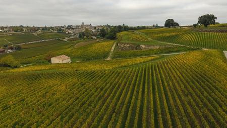 Aerial view of Saint Emilion vineyard in autumn, France, Europe