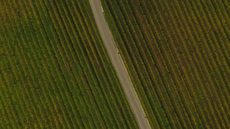 saint emilion: Aerial view of Saint Emilion vineyard in autumn, France, Europe