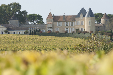 Vineyard and Chateau d'Yquem, Sauternes Region, France Standard-Bild
