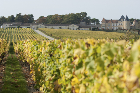 Vineyard and Chateau d'Yquem, Sauternes Region, France Stock Photo