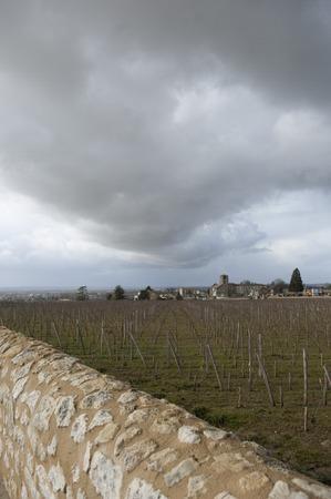 saint emilion: Vineyards of Saint Emilion with ruined church, Bordeaux, France, Europe