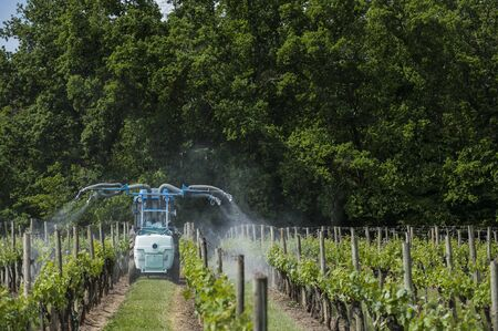 tumors: Agricultural chemical treatments in spring vineyard, France