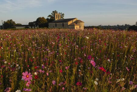 aquitaine: Churche, chapel with flowers field, Gironde, Aquitaine, France Stock Photo