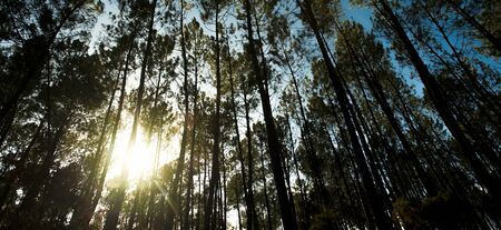 Beautiful sunbeams in beach forest, Landes, France Stock Photo