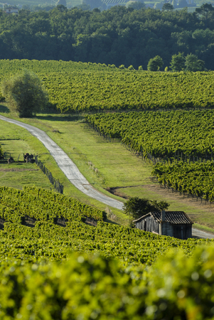 Famous wine route in Bordeaux vineyards, Aquitaine, France Stock Photo