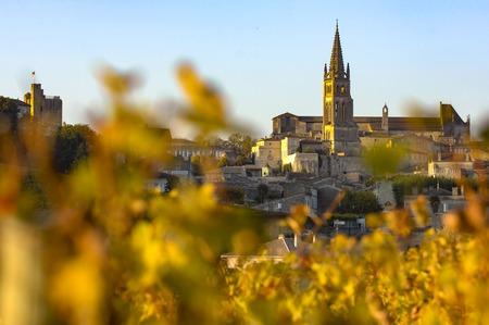 saint emilion: Saint Emilion, Vineyard Sunrise, Bordeaux Wine, France, Europe