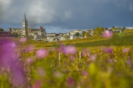 Vineyards of Saint Emilion, Bordeaux Vineyards, France