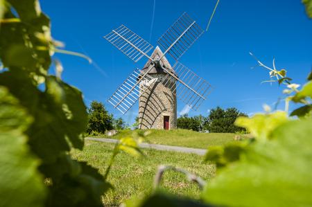 Vineyards and windmill near Loupiac, Gironde, Aquitaine, France