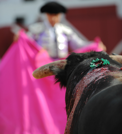 corrida de toros: El Toro - Bullfigth corrida