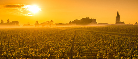 Saint Emilion Sunrise, Bordeaux Vineyard, France Stock fotó