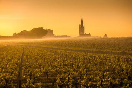 サン テミリオン日の出、フランス、ボルドーのブドウ畑 写真素材
