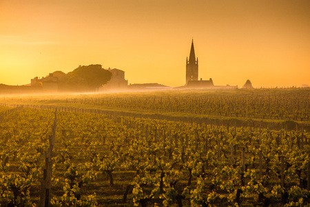 Saint Emilion Sunrise, Bordeaux Vineyard, France Archivio Fotografico