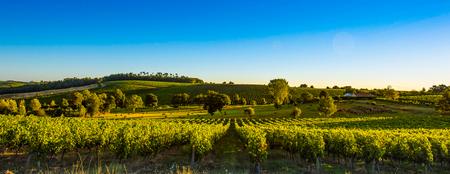 일몰 풍경 보르도 wineyard 프랑스, 유럽 자연