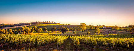 Coucher de soleil paysage bordeaux vignoble france, europe Nature