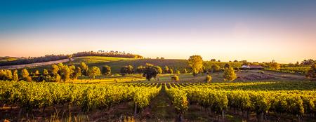 Zonsonderganglandschap Bordeaux wineyard Frankrijk, de Aard van Europa