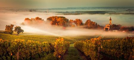 Sunset landscape and smog in bordeaux wineyard france, europe Standard-Bild