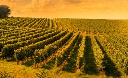 日没の風景ボルドー ワインヤード フランス、ヨーロッパ