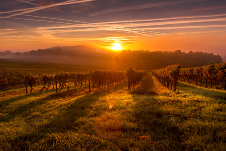 Beautiful Sunset landscape bordeaux wineyard france europe Standard-Bild