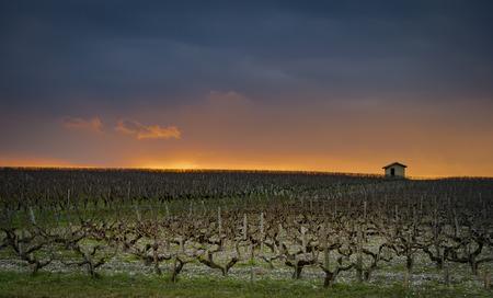 Beautiful sunset landscape bordeaux wineyard, Medoc, france europe 版權商用圖片