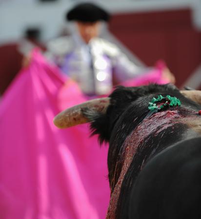 El Toro - Bullfigth corrida