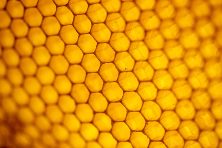 Honey comb. fragment of honeycomb, Abstract background, France Europe