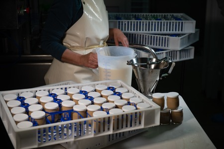 Production of yogurt in a farm, homemade cows milk yoghurt , France