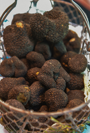 Fresh french black truffles in a basket, Perigord, France