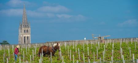 Labour Vineyard with a draft horse, Saint-Emilion-France, Europe