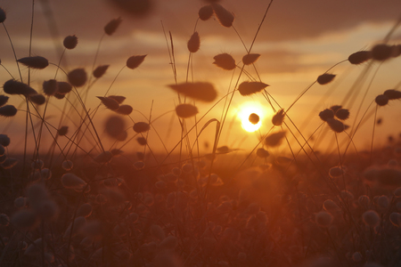 Rural floral field on sunset. natural summer background, France Stock Photo