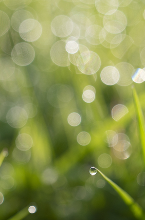 Blurred Grass Background With Water Drops, Light spring