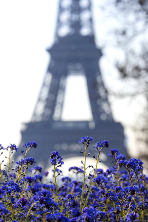 Eiffel tower and blue flowers, Paris, France Stock Photo