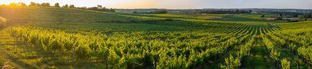 Sunset landscape bordeaux wineyard france, europe Nature