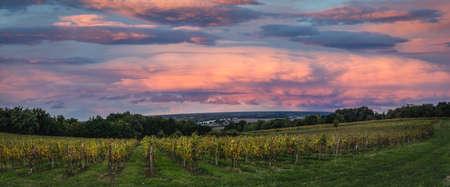 Bordeaux Vineyard at sunrise in autumn, Langoiran, Gironde