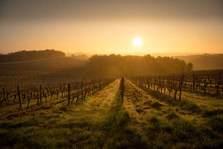 Bordeaux vineyard over frost and smog and freeze in winter, landscape vineyard