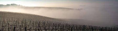 Bordeaux vineyard over frost and smog and freeze in winter, landscape vineyard Imagens