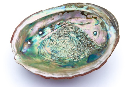 abalone shell inside