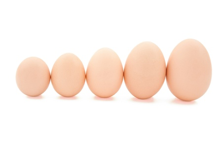 different size eggs line up